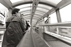 Hong Kong (Igorza76) Tags: república popular china 中华人民共和国 中国 asia oriental east peoples republic hong kong special administrative region 中華人民共和國香港特別行政區 香港 hk isla island kowloon bay bahía central midlevels street calle escaleras mecánicas escalator walkway system covered photography fotografia callejera fuji fujixt10 black white bw blanco negro hongkong txina oporrak