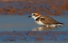 IMG-20180401-WA0014 (TARIQ HAMEED SULEMANI) Tags: sulemani tariq tourism trekking tariqhameedsulemani winter wildlife wild birds nature nikon