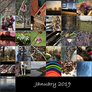 January mosaic