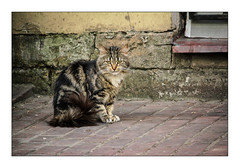 camouflage cat (Armin Fuchs) Tags: arminfuchs stpetersburg russia cat backyard portrait diagonal jazzinbaggies