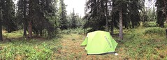 Road Trip - 015. (i threw a guitar at him.) Tags: alaska road trip 2018 iphoneography iphone photo denali national park us forest wood woods trees moss camp camping hike hiking unit 27 backcountry backpacking panorama wide angle wet wild nature tent spruce pitched green