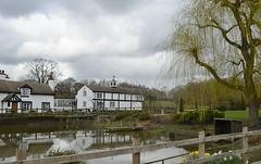 Brook Lodge 170319_DSC3301 (Leslie Platt) Tags: exposureadjusted straightened cheshirewestchester huxley hoofield hoofieldlane brooklodge blackswan