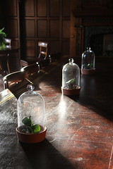 Bottle jars (Capt' Gorgeous) Tags: insolecourt llandaff cardiff house stately manor gothic
