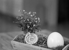 Coming soon (Rosenthal Photography) Tags: treu ff120 ei familie anderlingen ilforddelta3200 dekoration städte asa3200 blume bw 45x6 20170503 analog mamiya645pro dörfer siedlungen easter indoor stilllife mood spring march egg plant flower mamiya 645pro 150mm f28 ilford delta delta3200 epson v800 rodinal