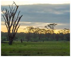 Kenyan Sunrise (nickyt739) Tags: ol pejeta conservancy kenya east africa wild wildlife safari landscape nature flickrsbest nikon dslr d5100 sunrise sky trees light travel adventure