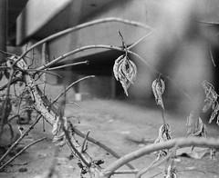000093680003_ (ian2001s) Tags: fomapan400 gf670 fuji 6x7 filmphotographic bwfilm 120