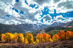 Sonora Pass Storm Clouds! Eastern Sierras Fall Foliage California Fall Color! High Sierras Autumn Aspens Red Orange Yellow Green Leaves! Sony A7R II Carl Zeiss Sony Vario-Tessar T* FE 16-35mm f/4 ZA OSS Lens! Elliot McGucken California Fine Art Landscape (45SURF Hero's Odyssey Mythology Landscapes & Godde) Tags: sonora pass storm clouds eastern sierras fall foliage california color high autumn aspens red orange yellow green leaves sony a7r ii carl zeiss variotessar t fe 1635mm f4 za oss lens elliot mcgucken fine art landscape