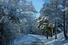 A Winters Trail (steve_whitmarsh) Tags: aberdeenshire scotland scottishhighlands highlands winter snow trees forest road topic abigfave cairngorms