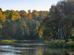 Autumn.. (janepesle) Tags: russia moscow botanic garden travel tree foliage lake landscape city water outdoors autumn москва ботаническийсад