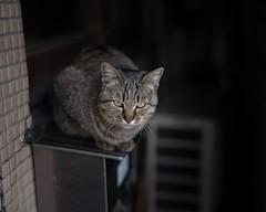 Mituhama (yuyosimu) Tags: planar50mm planar zeiss sel50f14z cat a7rii fe5014za fe50mm fe50