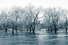 River Flood Ice (Grant is a Grant) Tags: kingston novascotia canada ca nikond7200 70300mmafp 70300mm february winter flood ice trees monochrome split tone annapolisvalley ns