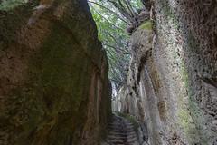Via cava San Giuseppe (Cristiano Pelagracci) Tags: sovana pitigliano viecave viacava maremma forest tree street etruscan ancient tufo stone carved italy tuscany toscana green nature