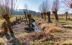 Gussau, Naturschutzgebiet Volksdorfer Teichwiesen (16:10) (Thragor) Tags: wiese teichwiesen naturschutzgebiet landschaft ccby40 hintergrund 1610 16x10 background landscape meadow naturereserve
