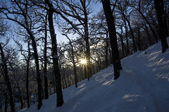 Sunlit Forested Hillside (steve_whitmarsh) Tags: aberdeenshire scotland scottishhighlands highlands craigendarroch winter snow mountain hills trees forest sun starburst cairngorms topic