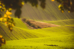 IMG_0655 (PhotoVision by Pavel Rezac) Tags: agriculture autumn background beautiful chapel countryside cultivation czech environment europe famousplace farm farmland field fields grass green harvestfield hill hills hillside landscape light line lines meadow moravia natural nature plant republic rural scenery seeds shadows spring stripe stunning summer sunny sunrise sunset trees tuscany view wave waves wildlife wine yellow nenkovice southmoravianregion czechrepublic cz