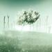 Far Cry 5 / Peace Tree