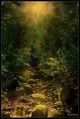 Gunung Gading National Park (VERODAR) Tags: gununggading nationalpark nature evening eveninglight eveningsky jungle rainforest trees rocks ray sarawak sarawakborneo kuching nikon verodar veronicasridar ngc