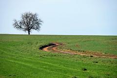 Sur le chemin (Croc'odile67) Tags: nikon d3300 sigma contemporary paysage landscape ciel campagne champ sky arbre tree chemin