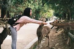 Stretch (GingerKimchi) Tags: nara osaka japan travel nature asia film 35mm fujifilm canon deer canona1 2019 spring february march