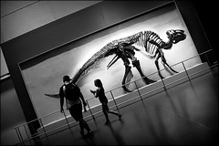 jurassic walk (bostankorkulugu) Tags: bones light silhouette walk man girl kid child father papa dad daddy daughter fossil skeleton dinosaur dino northamerica america canada ontario toronto royalontariomuseum rom