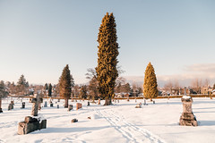 Vancouver-Winter-Walks-16 (_futurelandscapes_) Tags: vancouver winter snow cold february mountainview cemetery trees arboretum sunset evening graves sunny blue white vintage