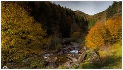 """""""Recuerdos otoñales"""" (Gerkraus) Tags: otoño aragon canon paisaje colo montaña pirineos forest"""