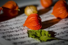 Notes and plants (Martin Bärtges) Tags: farbenfroh colorful music notes indoor blossoms nikonphotography nikonfotografie natur nature naturephotography naturfotografie d7000 nikon studio grün green orange blüten flowers blumen lampion dandelion