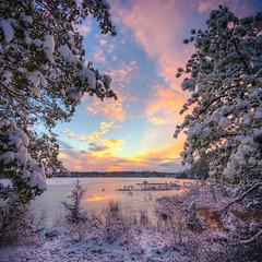 A Window to Winter (gregmolyneux) Tags: 14mm hdr landscape pinelands snow squareformat staffordforgewildlifemanagementarea trees eagleswood newjersey unitedstates usa