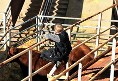 little cowboy (oldogs) Tags: boy child cowboy cow cattle lines shadows nwss