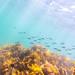 St Leonards Pier Underwater-33