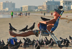 (excelAnt) Tags: captionme funny man birds pigeons beach