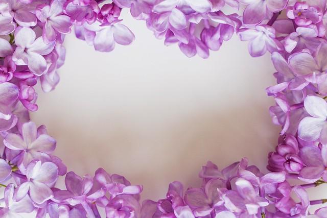 Обои цветы, белый фон, сирень картинки на рабочий стол, раздел цветы - скачать