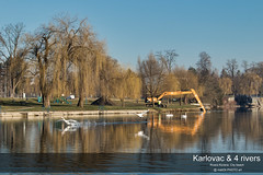 Springs working on Korana riverside (malioli) Tags: river tree water swans birds urban city town place reflection canon croatia hrvatska europe