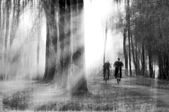 Illuminations On A Bike (Alfred Grupstra) Tags: people blackandwhite nature outdoors tree walking men silhouette forest monochrome fog landscape autumn woodland mist nonurbanscene winter backlit footpath light lightbeam
