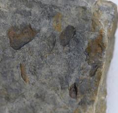 DSC_9018 (2) (jgdav) Tags: macro ancient rock pictograph image blue ochre america