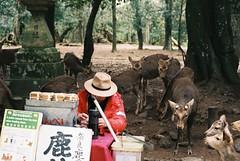 King's Throne (GingerKimchi) Tags: nara osaka japan travel nature asia film 35mm fujifilm canon deer canona1 2019 spring february march