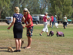 Cohuna dog show (2) (Boobook48) Tags: australia dogshow cohuna victoria dog