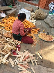 Verarbeitung der Ernte, Nepal (Terschueren Oldenburg) Tags: mais ernte reif asien