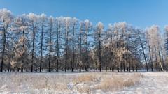 Happy New Year 2019 (Sergei Kolesnikov) Tags: kaluga kalugaoblast russia ru