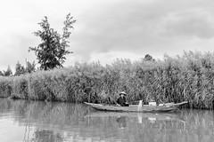 Hội An fisher (gambajo) Tags: fisher fisherman fishing fishnet hoian vietnam travel people man water asia blackandwhite blackwhite reed fischer mann boat boot