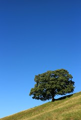 Solitree (RoystonVasey) Tags: canon eos m 1855mm stm zoom north yorkshire ydnp west burton coverdale sun walk blue sky