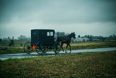 rain buggy (Jen MacNeill) Tags: lancaster county pa pennsylvania road driving winter farm farmland agriculture silo amish barn ag horse carriage
