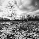 Cold Swamp thumbnail