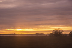 Sunset over Halland (Rudi Pauwels) Tags: sverige sweden schweden halland sj3000sunset trees sea water clouds sky 2019onephotoeachday