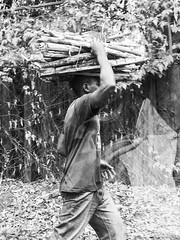 Firewood for the Day II - 30th November 2018 (princetontiger) Tags: blackandwhite grayscale monochrome nairobi kenya street streetphotography streetphotograpghy firewood