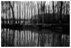 ICM Trees , On the road (wwshack) Tags: icm intentionalcameramovement nts pollockcountryhouse scotland blackandwhite monochrome ontheroad