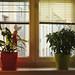 Window Decorative Flowers