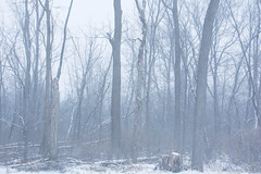 2019 Snow Trees-38 (Michael L Coyer) Tags: snow snowstorm forest woods tree haze winter