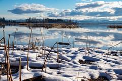 Fern Ridge (dsgetch) Tags: snow snowstorm fernridgereservoir fernridge fernridgewildlifearea lake reservoir fernridgelake scenic cascadia pacificnorthwest pnw pnwlife pnwwonderland oregon lanecounty willamettevalley junctioncityoregon depthoffield