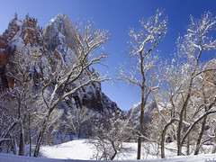 Zion National Park in the Snow (swissuki) Tags: zion national park landscape nature mountain sky snow usa ut utah